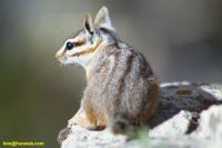 gc000704_squirrel_rl.jpg